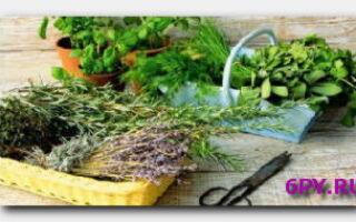 Статья. Укрепляем волосы «бабушкиными» рецептами: секреты приготовления травяных отваров