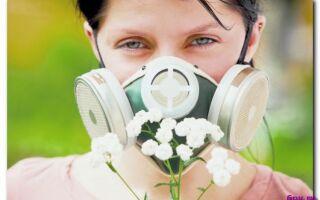 Как бороться с сезонной аллергией-три эффективных способа