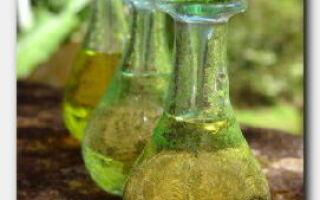 Статья. Чем полезно масло чайного дерева для волос?