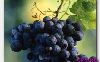 Виноградный уксус-полезности