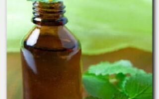 Статья. Масло перечной мяты: применение для лица, волос и губ